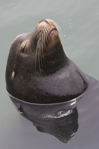 Fisherman Charged With Bing Bait Stealing Sea Lion Newport Beach